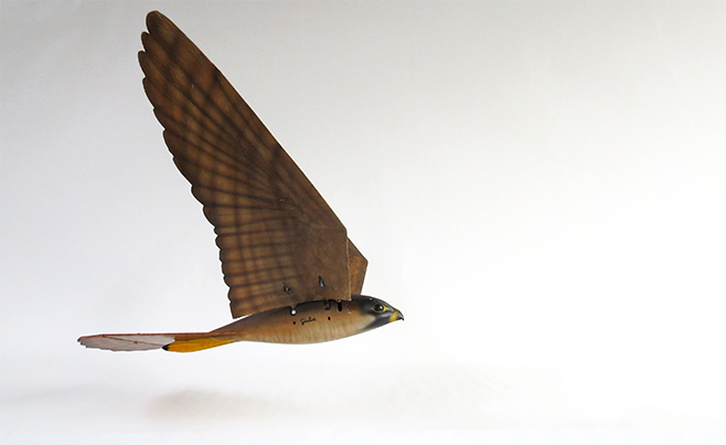 Robird Falcon Inflight