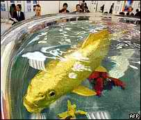 Picture of Gold Koi