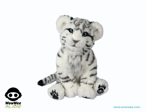 Picture of White Tiger Cub